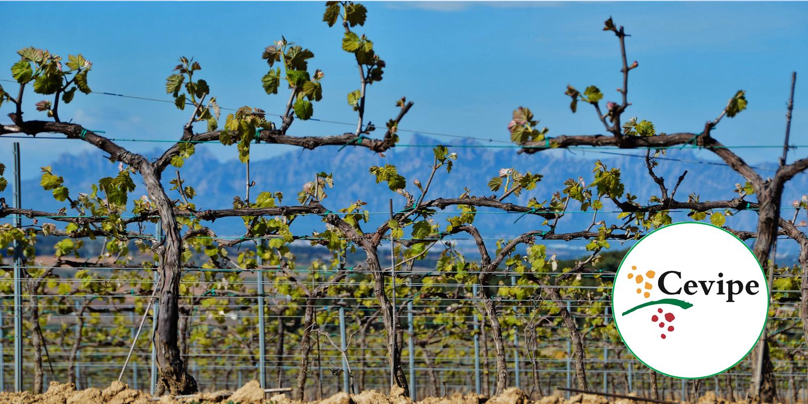 Informació i assessoramentAgro-Cevipe, tot per al viticultor