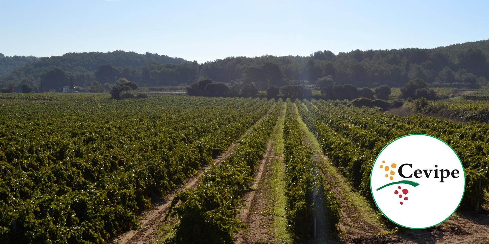 55 milions de Kg de producció mitjana anual6.500 hectàrees cultivades